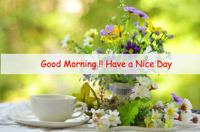Premium Good Morning Flower Image Free Download Ontaheen
