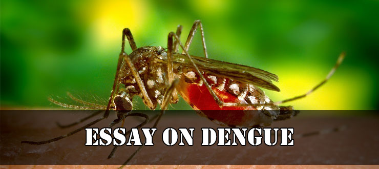 Essay on Dengue