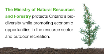 The Ministry of Natural Resources and Forestry protects Ontario's biodiversity while promoting economic opportunities in the resource sector and outdoor recreation.