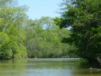 paddlers in byng island conservation area