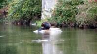 Resident Beaver on the Credit River.