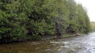 Hendrickson hatch on the Credit River.