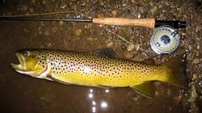 Native Credit River brown, taken on a dry.