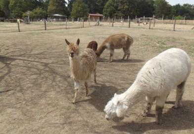 Une après-midi à la ferme Souchinet