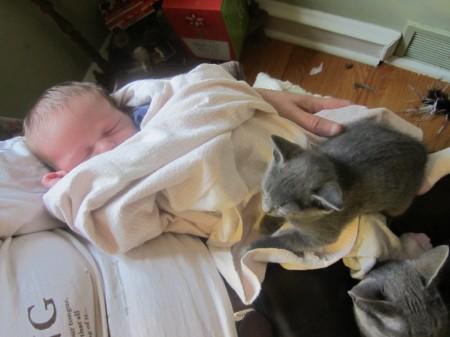 الأطفال والقطط
