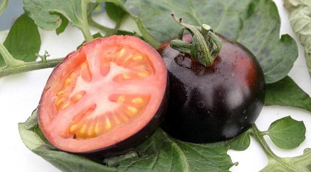 طماطم1