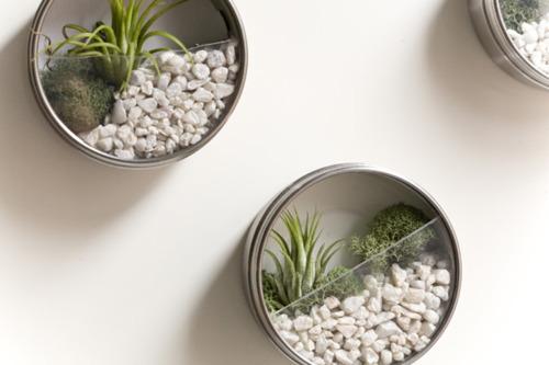 احواض النباتات