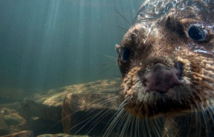 Preview- Natural World: Supercharged Otters