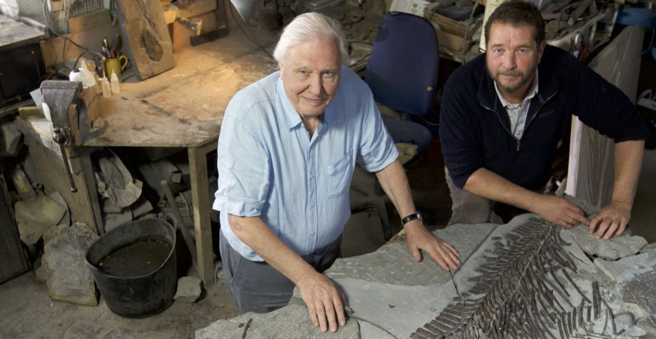 Preview Attenborough And The Sea Dragon Onthebox
