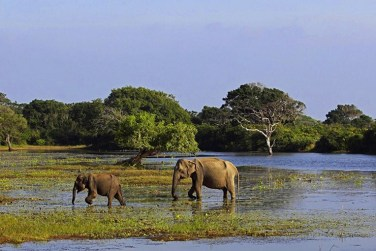 Elephants in Lahugala - Elephants, beaches and temples of Sri Lanka
