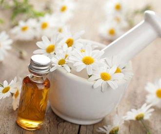 Roman Chamomile Essential Oil For Health