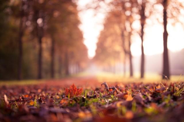 road-autumn-red-leaf-november