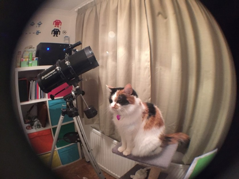 Fifi in fish-eye
