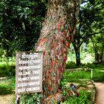 killer tree Choeung Ek Phnom Penh photo Ooaworld