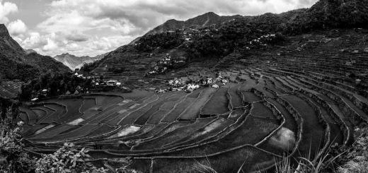 Banaue Rice Terrace