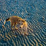 Beach Dog El Nido Palawan Philippines