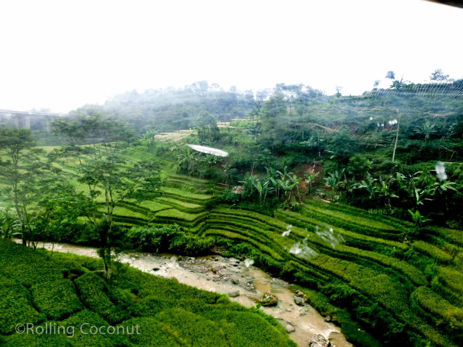 Train View Rice Terraces Bandung Jakarta Indonesia Photo Ooaworld
