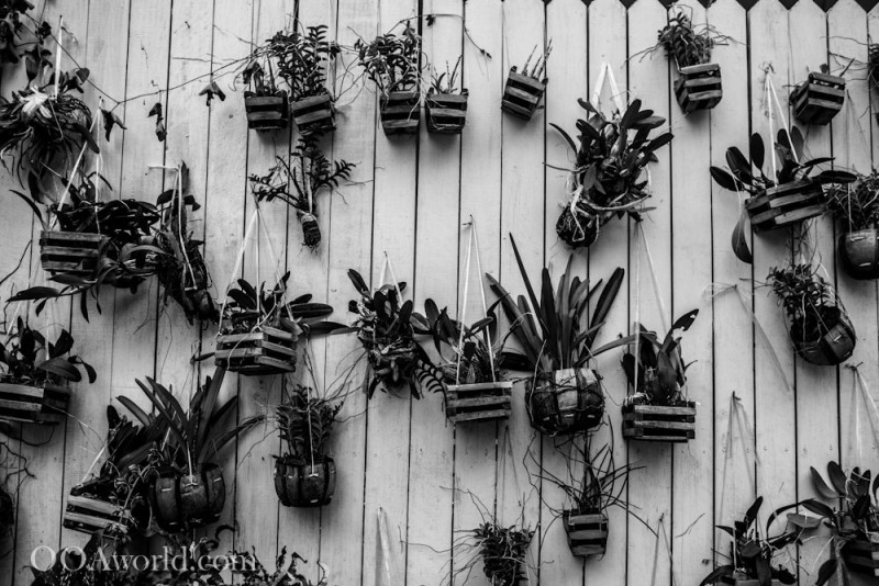 Dancing Flower Pots Abstract Texture Photography Photo Ooaworld