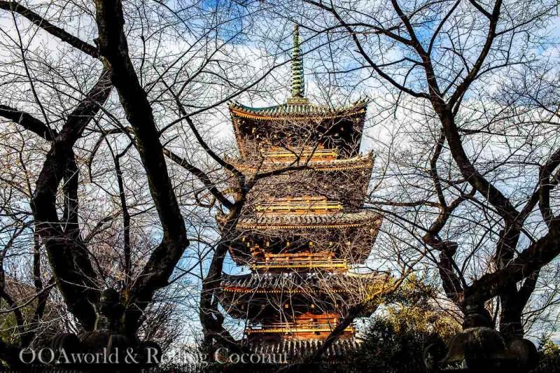 Ueno Park Pagoda Tokyo Photo Ooaworld