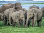 Habarana Elephant Safari in Sri Lanka