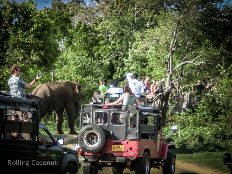 Habarana Elephants Safari Jeep Tourists Minneriya Sri Lanka ooaworld Rolling Coconut Photo Ooaworld