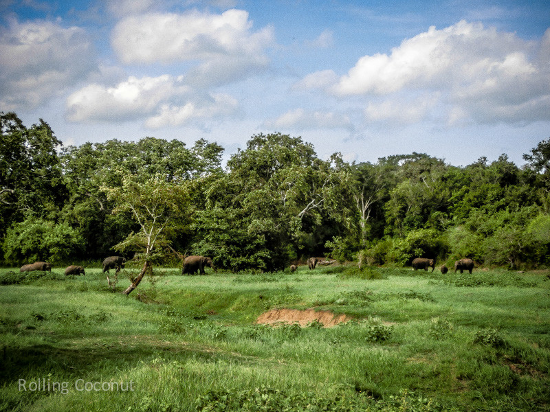 Habarana Elephants Safari View Minneriya Sri Lanka ooaworld Rolling Coconut Photo Ooaworld