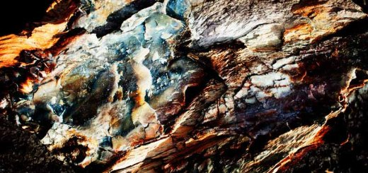 Petrified Wood texture, Painted Desert, Arizona