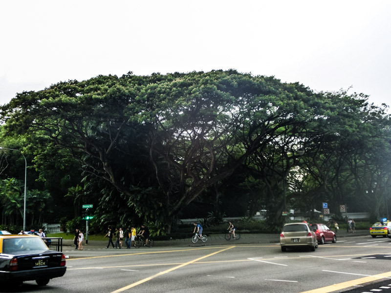 singapore street view photo ooaworld Rolling Coconut