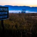 Wildlife Has Right of Way Swaziland