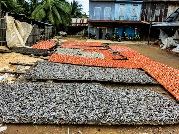 drying fish battambang cambodia photo ooaworld Rolling Coconut