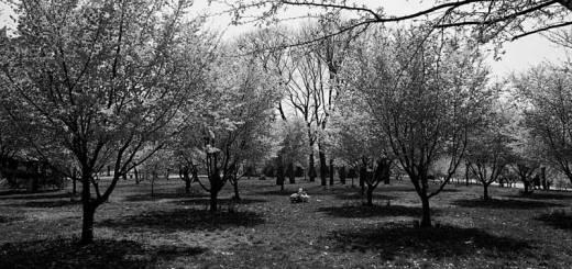 Flushing Meadows, NYC, New York