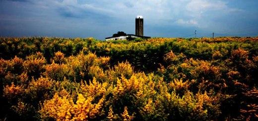 Photos Pennsylvania Summer Yellow Fields