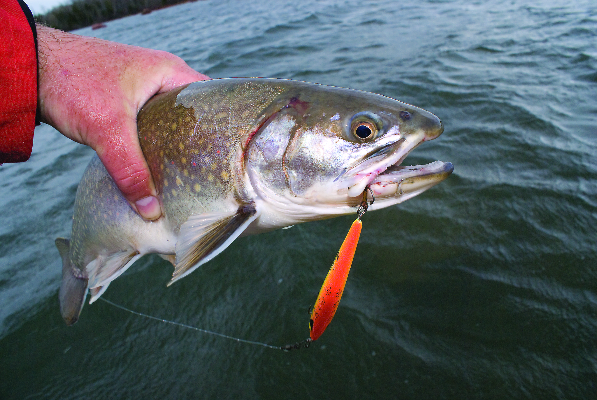 spring brook trout