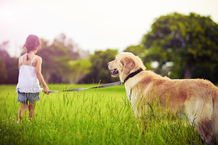 hunting dog - Girl and Dog