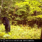 Terry Downer sent in this photo of a bear holding a stick, just north of Bobcaygeon.