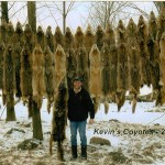 Kevin Funck shows the 38 coyote hides he has preserved from the 2015 winter hunt