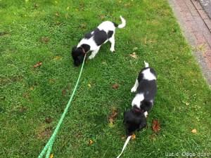 even de pups uitlaten