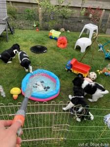 we krijgen een zwembad !!!