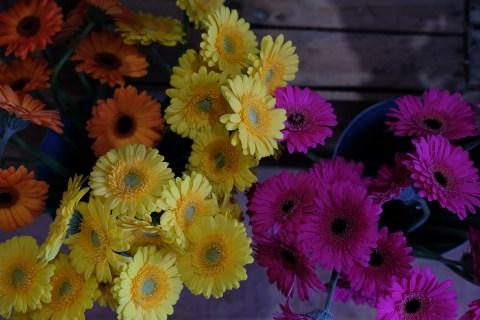 oopsadaisy-florist-beauly-12