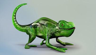 chameleon_video_still2_tcm245-1821841