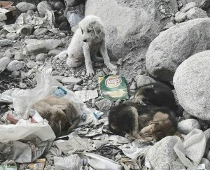 Street dogs in Bangalore Image Credits: Philip Victor