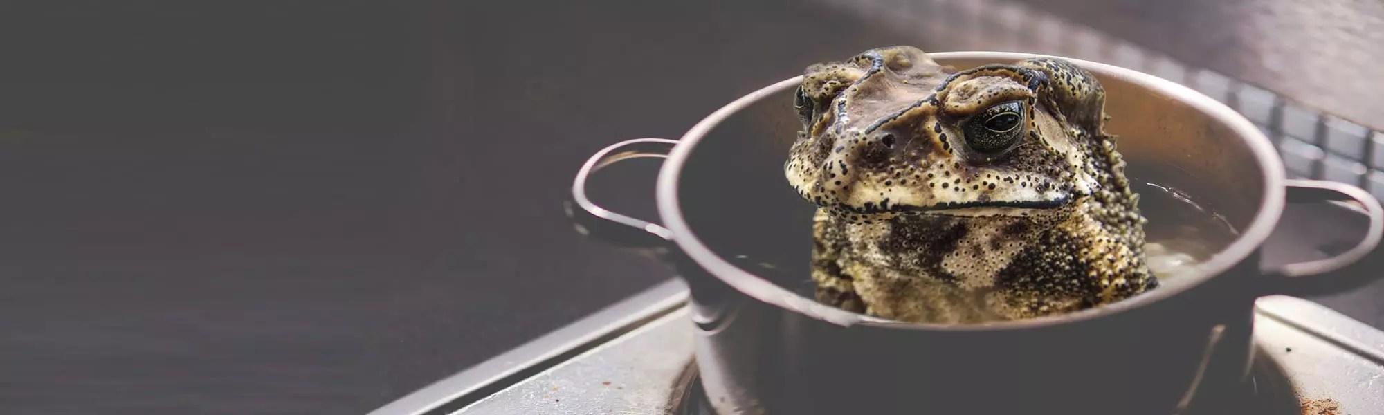 frog in pot recruitment banner