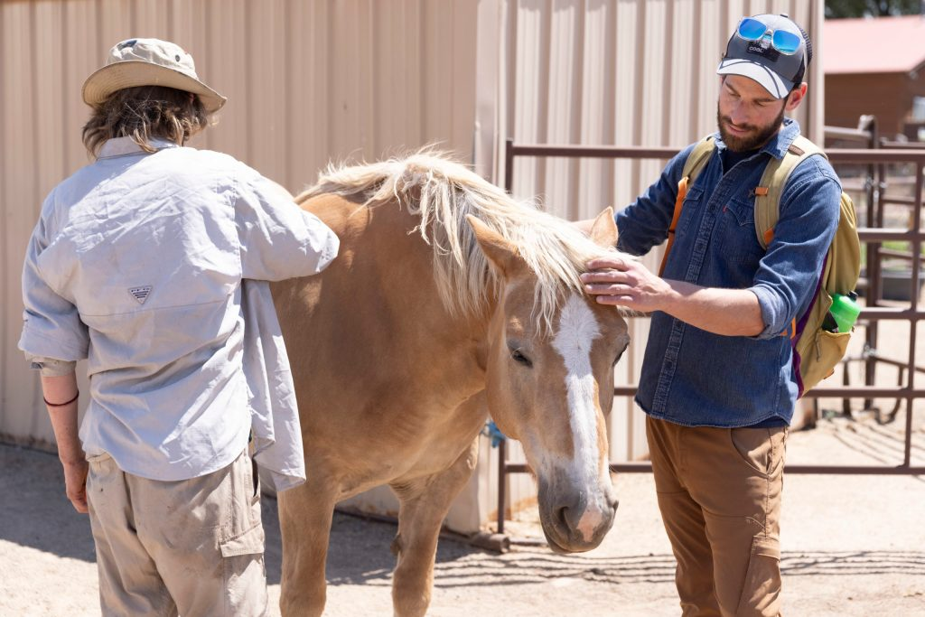 Clinical therapist Mark Sobel and an Open Sky Wilderness Therapy student pet a blonde horse in the sun at Medicine Horse Center.