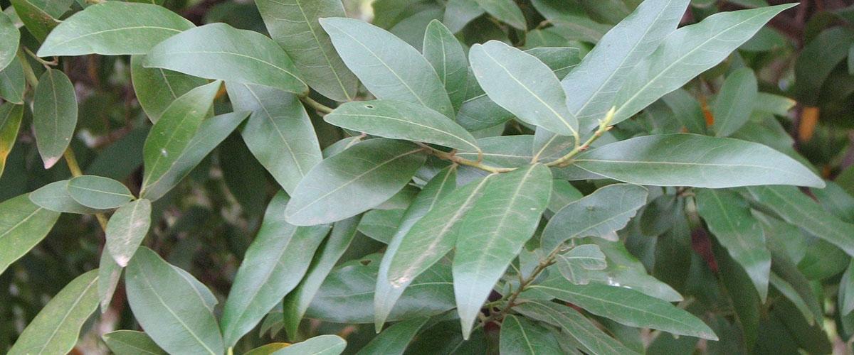 Plants Details
