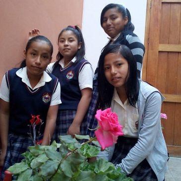 Plantando rosas