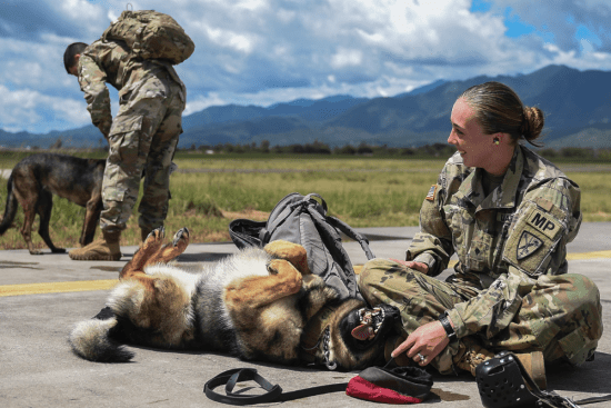 an Military Working Dog Handler at work