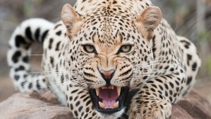 Can a Leopard Change His Spots? Wichita Pro-Aborts Haven't