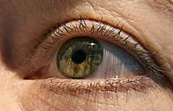 Glaucoma could blind 8.4 million Asians by 2010