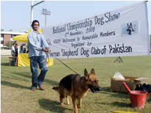 DHA Lahore goes to the dogs