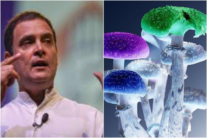 Congress and Magic Mushrooms